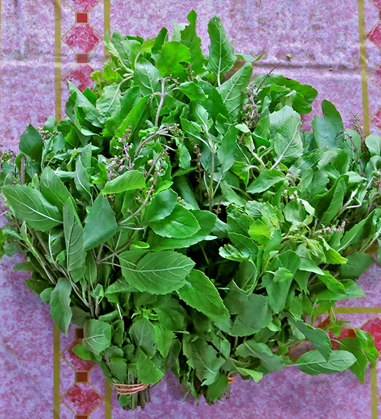 Grapow - Holy Basil: An aromatic variety of Thai Basil